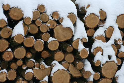 Cord wood (firewood) mentioned in the Recollections by Rieks Bouws article