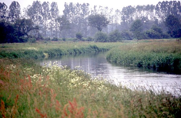 small river flowing through a field with wildflowers