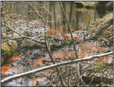 Photo of standing water in a bog with trees growing around. Some of the water is rusty red, showing the presence of iron particles.