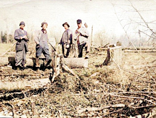 Four men standing with axes in a field alongside tree stumps.